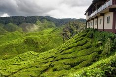 3. Cameron Highlands, Malaysia - 30 Awesome Places to Visit That You've Never Heard of ... → Travel
