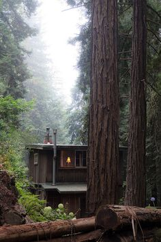 bluepueblo: Forest Cabin, Big Sur, California photo via amy Little Cabin, Little Houses, Forest Cabin, Cabin In The Woods, Cabins And Cottages, Log Cabins, Cozy Cabin, Big Sur, Log Homes