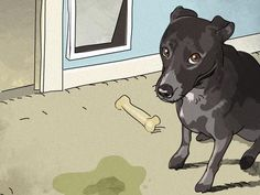3.1.13  clean pet stains and varmit damage