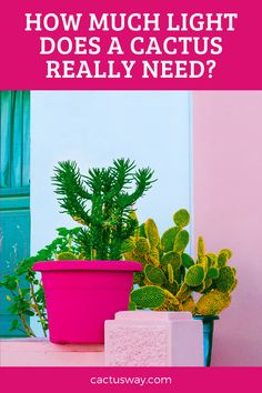As a desert plant, cacti need plenty of light. However, the amount of light each cactus needs depends on its type. Doing some research on your specific type of cactus may be beneficial. In this article, we will try to help you understand how much light your cactus needs. #howtogrowcactusindoor #cactuscaare #indoorcactuscare #indoorcactusplantshouseplant #cactustips Desert Flowers, Desert Cactus, Desert Plants, Indoor Cactus Plants, Cacti, Cactus Facts, How To Grow Cactus, Cactus Care, Cactus Types