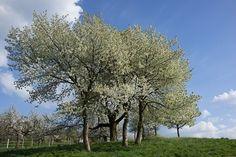 Trees, Park, Spring, Flower
