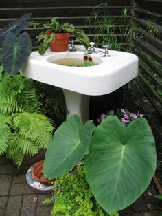 Putting Your Garden On A Pedestal U2014 Australia | Sinks, Garden Sink And  Gardens