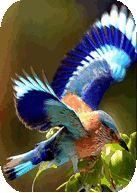All Birds Wallpapers - https://apkfd.com/all-birds-wallpapers/