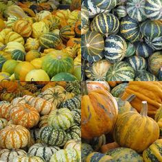 Kürbisse - Sorten Pumpkin, Vegetables, Food, Pumpkins, Essen, Vegetable Recipes, Meals, Squash, Yemek