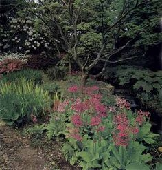 shade landscaping plans | TLC Home Bog Covers for Shade Garden Ideas