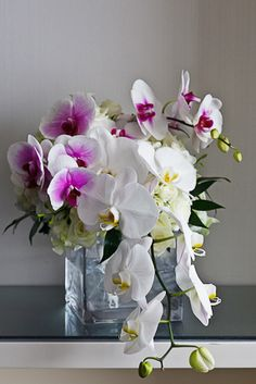 Orchids in pink and white