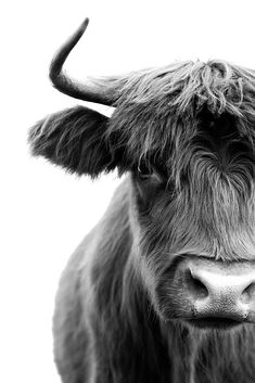 Straight Back at You B+W Highlanders in the Hinterland is Pampa's new photography series, produced in collaboration with The Farm Byron Bay. These images capture the individual personal Farm Photography, Photography Series, Animal Photography, Digital Photography, Portrait Photography, Farm Animals, Animals And Pets, Cute Animals, Amazing Animals