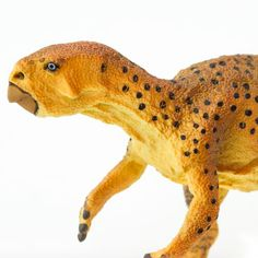 This Psittacosaurus toy is the perfect addition to your aspiring paleontologist's dinosaur collection. Recent Discoveries, Spinosaurus, Tyrannosaurus Rex, Ice Age, Small Plants, Mongolia, Large Dogs, Prehistoric, Predator