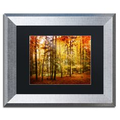 Fall Color by Philippe Sainte-Laudy Framed Photographic Print