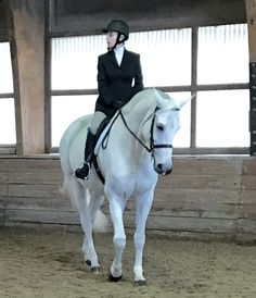 Cute Horses, Beautiful Horses, Horse Names, All About Horses, Horse Riding, Pegasus, Dressage, Old Town, Bellisima