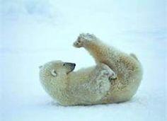 bear stetching - Bing Images