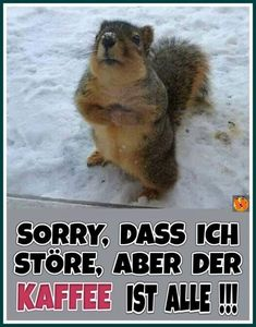 Happy Day, Winter, Animals, Funny Squirrel Pictures, Funny Sayings, Don't Care, Good Morning Funny, Funny Coffee Sayings, Funny Squirrel