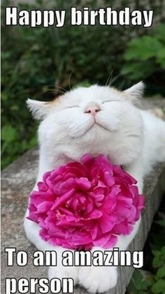 happy birthday mom 101 Funny Cat Birthday Memes for the Feline Lovers in Your Life Cat Birthday Memes, Funny Happy Birthday Wishes, Happy Birthday Images, Happy Birthday Greetings, Birthday Humorous, Birthday Sayings, Happy Birthday Quotes For Her, Happy Birthday Crazy Lady, Happy Birthday Animals