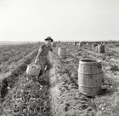 "October 1940. ""Near Caribou, Maine. The opening of school was delayed in sections of Aroostook County so children could help pick potatoes."""