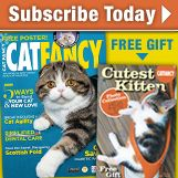 information on bob cat fever on the web a highly deadly disease for cats