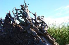 Driftwood on Dead Creek.