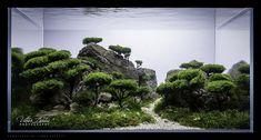 thiên nhiên tái hiện trong bể thủy sinh