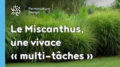 The miscanthus. E perennial multi function very permaculture! Permaculture Design, Rooftop Garden, Prince Edward Island, Succulent Pots, Growing Vegetables, Plant Decor, Horticulture, Amazing Gardens, Perennials