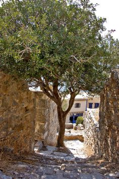This day trip to Spinalonga Island had one aim: exploring the past of a fortified islet which served a variety of roles over the centuries. Greek Flowers, Crete Island, Forest Mountain, Crete Greece, Tree Forest, Flowering Trees, Greek Islands, Day Trip, Architecture Art