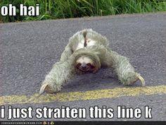 I love sloths!