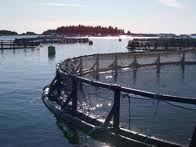 Cages at an Atlantic aquaculture company