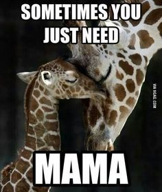 For a giraffe themed nursery? This picture would be cute next to the other giraffe-love photo. Cute Baby Animals, Animals And Pets, Wild Animals, Beautiful Creatures, Animals Beautiful, Sweet Pictures, Random Pictures, Tier Fotos, Mothers Love
