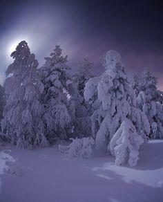 35PHOTO - optimist - ... sleep in the winter night Boris Polozkov