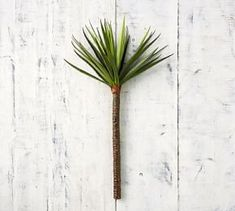 Add an architectural element to your botanical arrangements with our Faux Yucca Branch, crafted of hand-assembled fronds and bound onto a broad and sturdy branch. Use it as a bountiful vase filler or group several together within one of our plante… Jade Succulent, Succulent Wall Art, Succulent Species, Faux Succulents, Faux Plants, Indoor Plants, Wall Candle Holders, Vase Fillers, Glass Terrarium