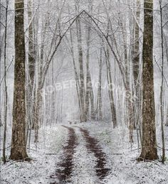 Snowy Path, Cathedral Branches, Photo by Robert de Jonge ©2010