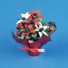 Miniature Six-Bloom Red and White Poinsettia