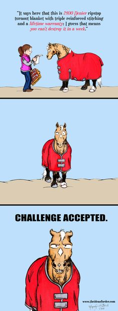 "LOL! Does your horse enjoy the ""how-quickly-can-I-destroy-my-blankets"" game?"