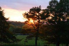 Sun setting through the trees at Benderloch