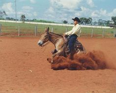 reining mule… *thumbs up*