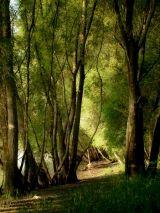 Szentendrei séták | Civil MultiMédia Trunks, Plants, Drift Wood, Tree Trunks, Plant, Planets