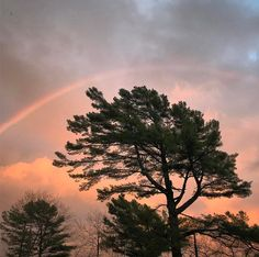 """35 Likes, 1 Comments - Maine Coast Heritage Trust (@maine_coast_heritage_trust) on Instagram: """"Rainbow over me very favorite white pine in the world."""""""