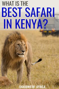 What is the Best Safari in Kenya? - Travel to Africa