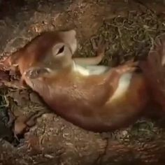 Cute Wild Animals, Animals And Pets, Funny Animals, Animals Are Beautiful People, Beautiful Creatures, Tree Rat, Birth Animal, Baby Squirrel, Wild Creatures