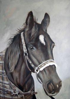paard olieverf 50 bij 60