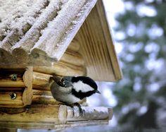 Katso lintujen lempiruuat - näin saat pihaan toivomiasi lintuja | Kodin Kuvalehti