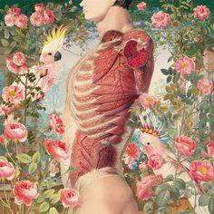 "Anatomic Collages from the ""Ciencias Naturales"" series by Juan Gatti"