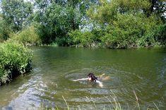 17 Non-Pools You Can Swim In Around London