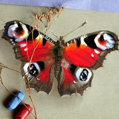Pastel, butterfly