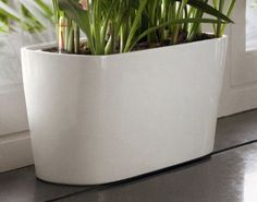 """Shopping for a long narrow planter for succulents: 16""""x6""""x7"""", comes in black as well. $40"""