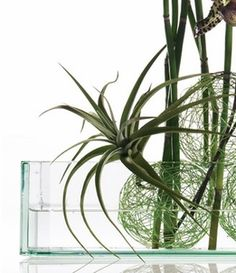 Glass Vases  Centerpiece Containers #saveoncrafts #dreamwedding