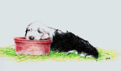 old english sheepdog by beamer.deviantart.com on @DeviantArt
