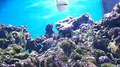 Video about A fish trying to eat some reef. Video of swimming, aquarium, water - 102405428 Aquarium, Swimming, Fish, Eat, Outdoor, Aquarius, Swim, Outdoors, Fish Tank