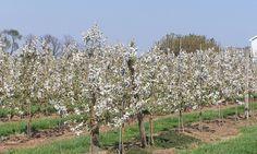 Plantarea pomilor fructiferi Vineyard, Outdoor, Sun, Plant, Outdoors, Vine Yard, Vineyard Vines, Outdoor Games, The Great Outdoors