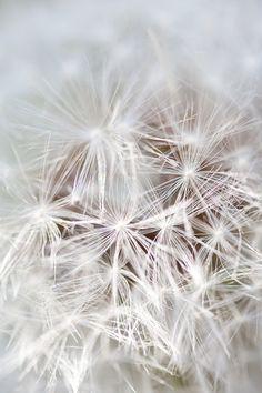 Carla Dyck Photography: Make a Wish