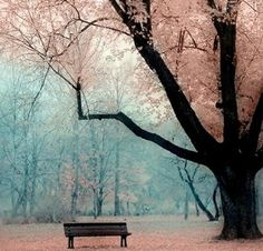 the tree and the bench