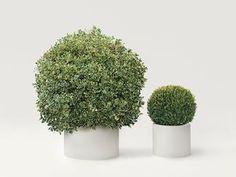 223 Plant decorations